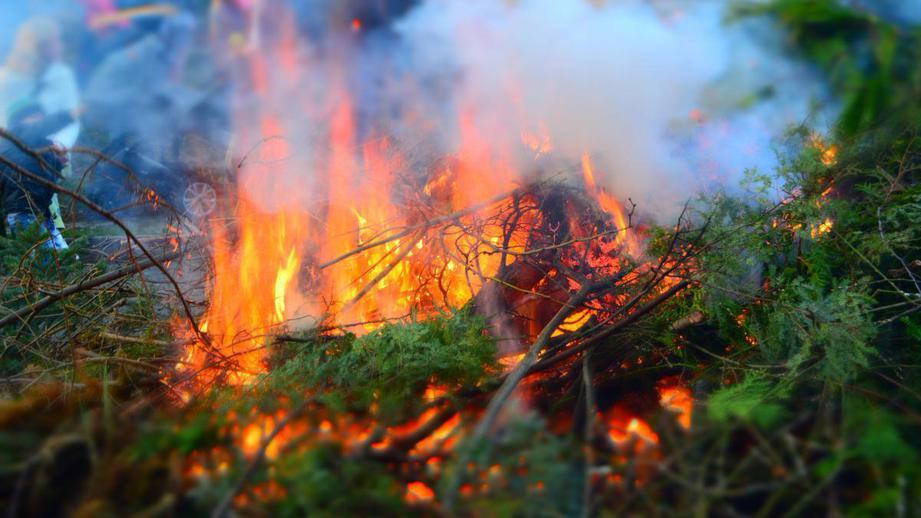 ВКлимовском районе области ликвидировали лесной пожар
