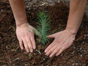 15 миллионов деревьев озеленили Челябинскую область