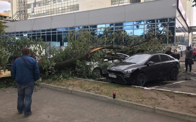 В Брянске на припаркованные возле БУМ-сити машины рухнуло дерево