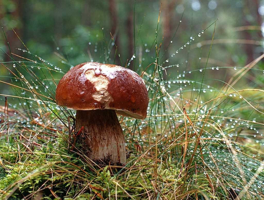 Неделя в Брянске начнется с тепла и небольшого дождя