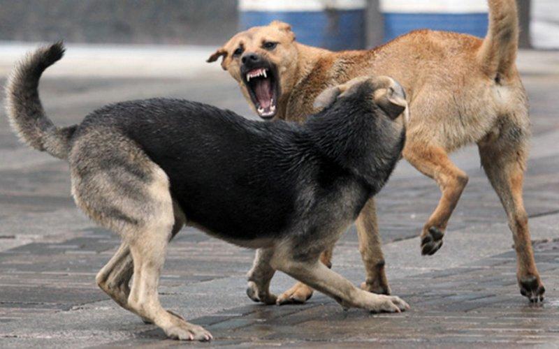 Жирятинскому району на отлов собак выделили 13 тысяч рублей