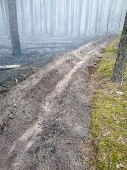 В Навлинском районе Брянской области загорелся лес