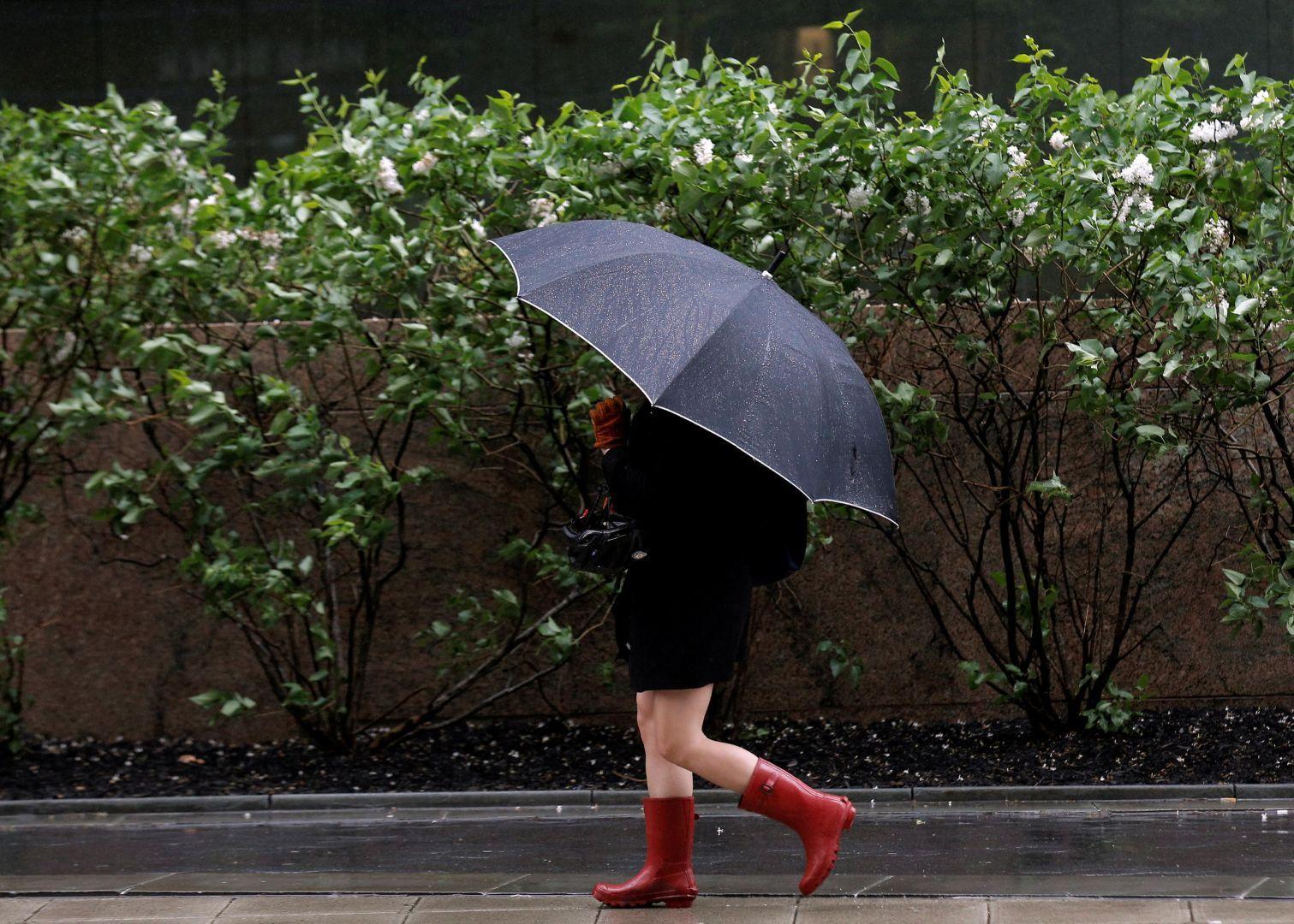 В субботу в Брянске вновь ожидается дождь
