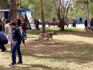 Укус волка не остался безнаказанным в Челябинске