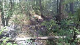 В Карачевском районе Брянской области в понедельник тушили лесной пожар