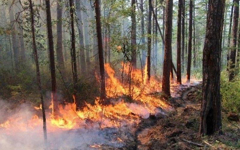 В Брянском районе потушили лесной пожар
