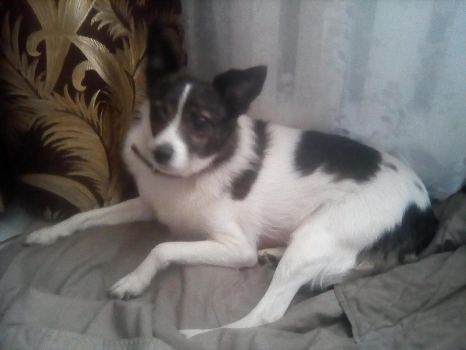 Брошенная в брянском лесу собака нашла любящего хозяина