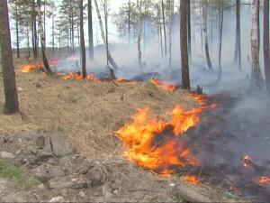 Кому выгодны лесные пожары: почему правительство против запрета на экспорт леса