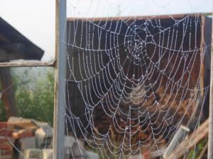 Почему паук не попадает в свою паутину? Летнее открытие