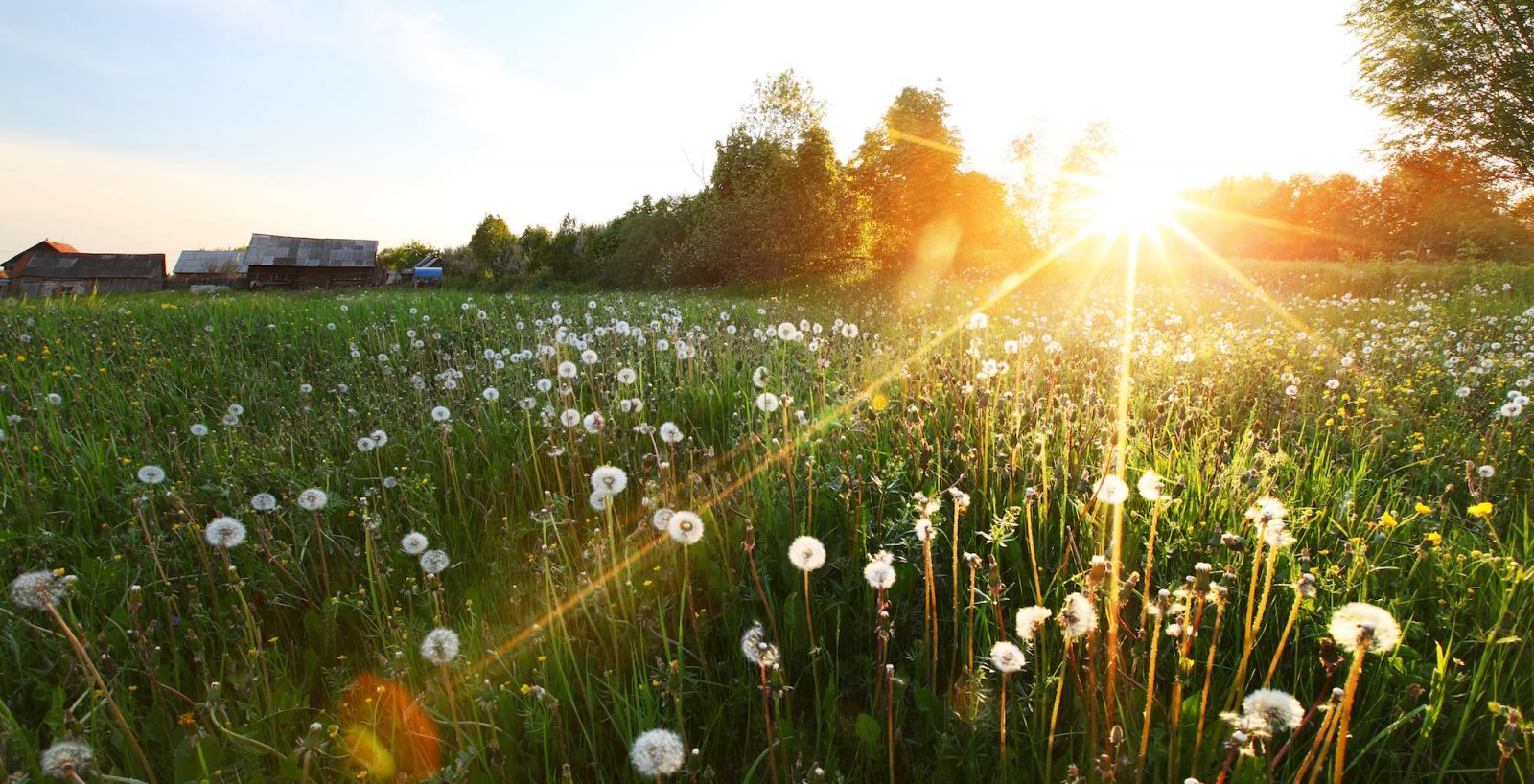 Завтра в Брянске ожидается умеренно-теплая погода