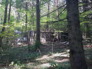 Фаллоимитаторы хранил дома хулиган, напавший на Эллу Памфилову