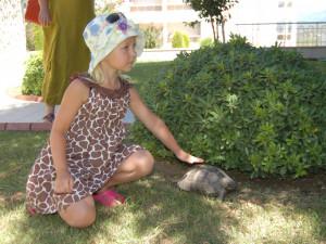Черепаха понимала по-английски. Турецкие впечатления