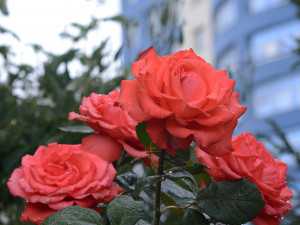 По типу «Угадай мелодию». 10 фотографий о Челябинске