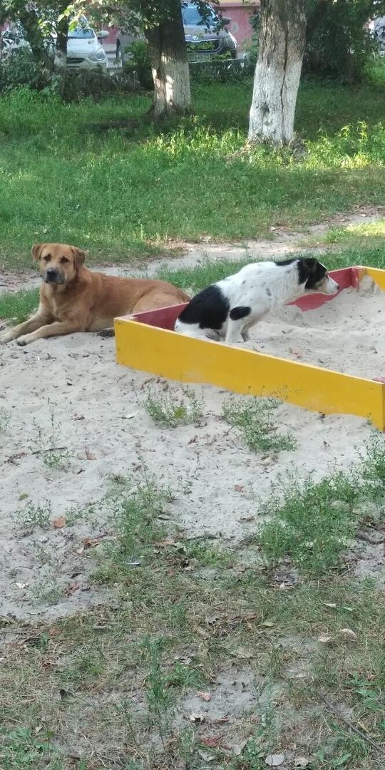 В Брянске детская площадка превратилась в собачий туалет