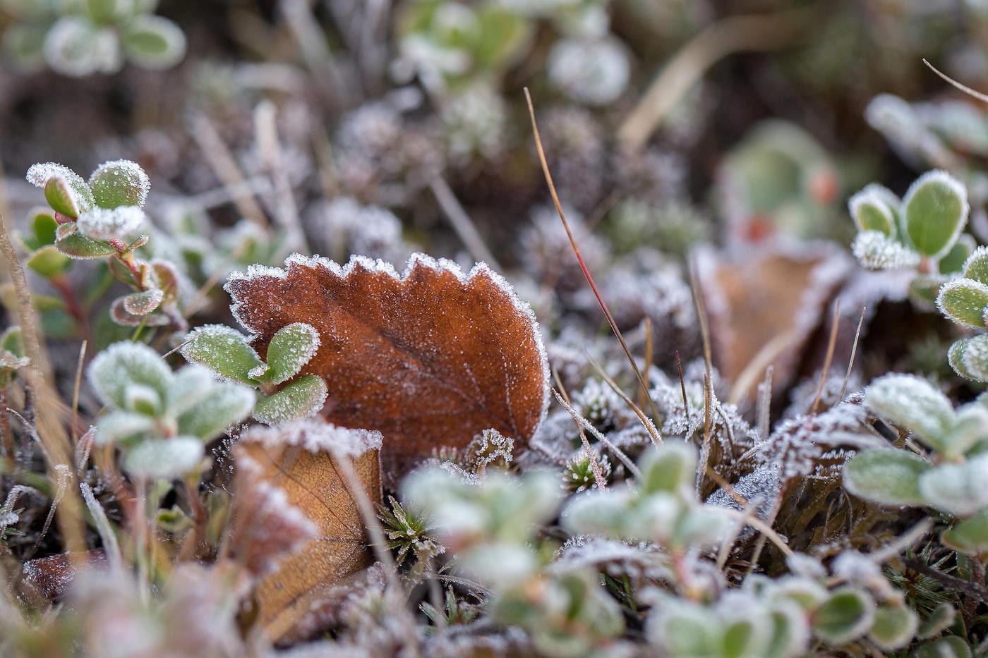 В ночь на среду в Брянске будет 4 градуса мороза