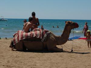 Чего хочется избежать, отправляясь на отдых в Турцию: день прилета – день отлета