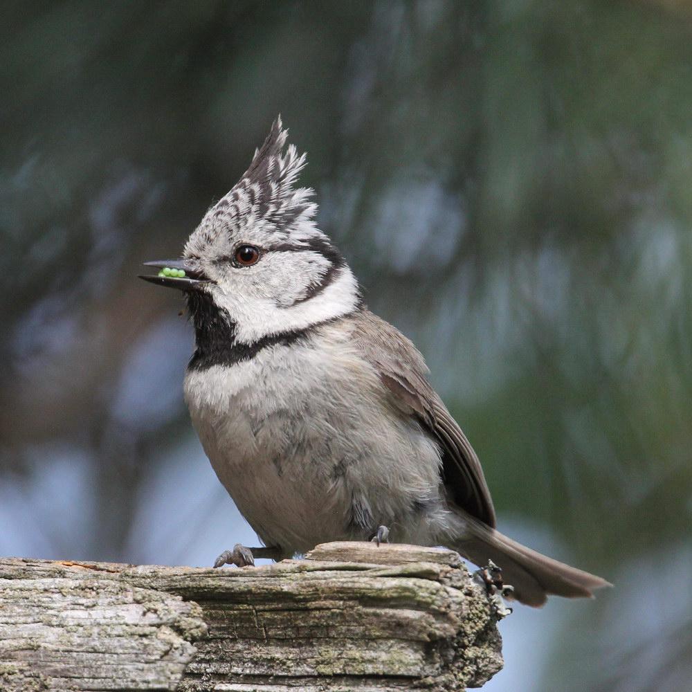 Брянцам предложили наблюдать за птицами