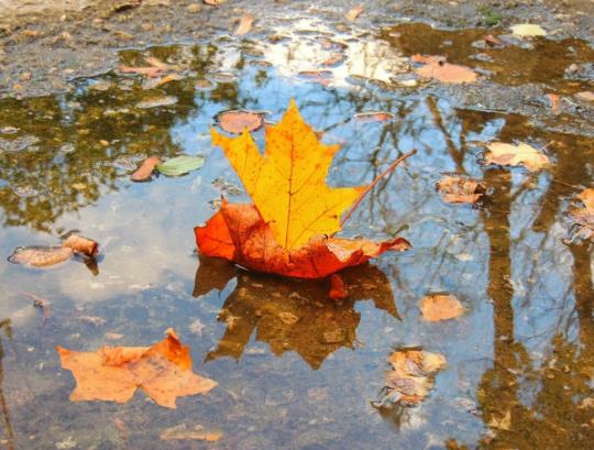 Неделя в Брянске начнется с дождя