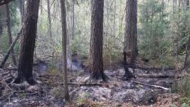 Лесной пожар сегодня тушили под Брянском