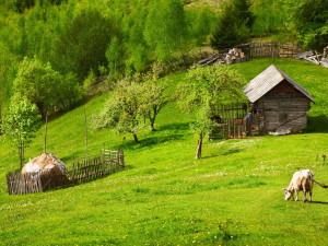Все российские богачи переезжают в деревню, в городских «гетто» останется нищета, считает иммунолог Абидов