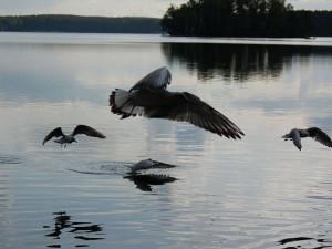 Почему владельцы баз отдыха на озере Кисегач не развивают территорию