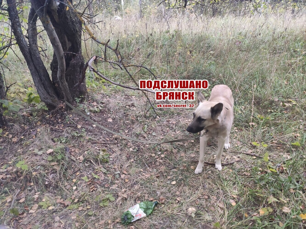 В Брянске собаку оставили умирать возле дерева