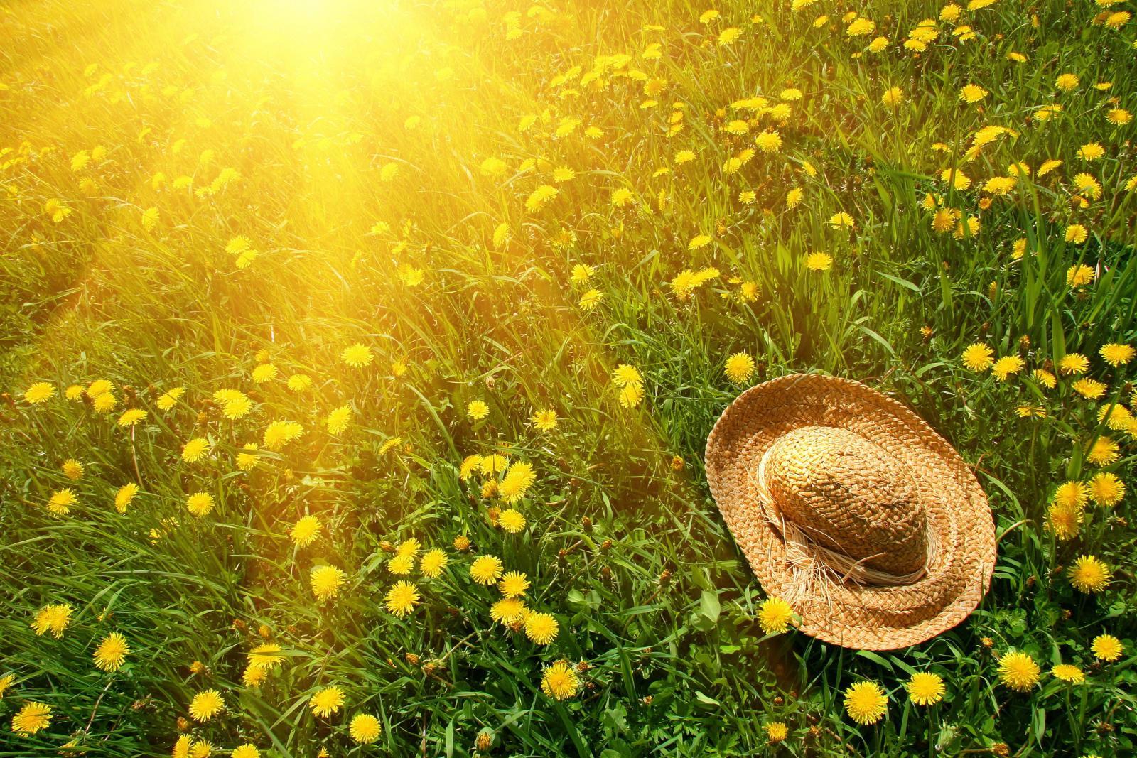 Завтра в Брянске будет жарко и без дождей