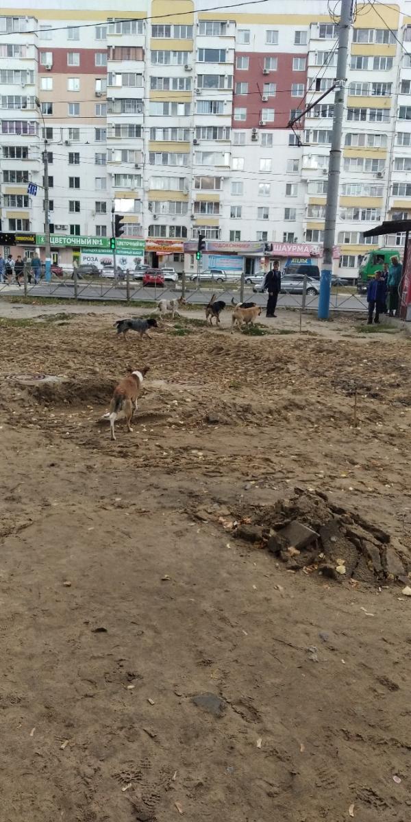 В Брянске стая бродячих псов кидается на детей