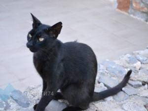 Кошка-наркокурьер попалась в Татарстане