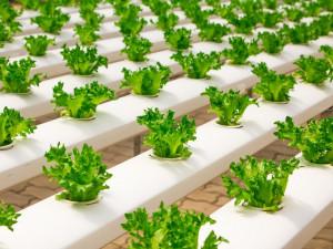 На Камчатке будет зелень круглый год