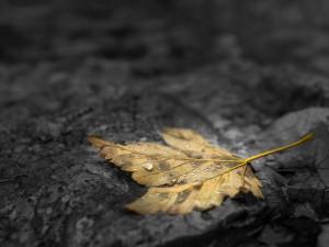 Похолодание придет с 9 октября, сменив тепло до следующего года