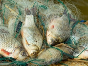 Челябинская область может остаться без рыбы