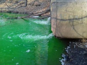 Кто выпустил зеленую реку в Металлургическом районе?