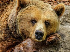 Вечный символ России. Почти 2/3 граждан считают медведя подходящим и правильным символом нашей страны