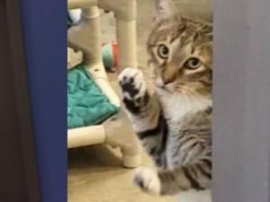 В Техасе кота посадили в «одиночку» за то, что он выпускал других животных