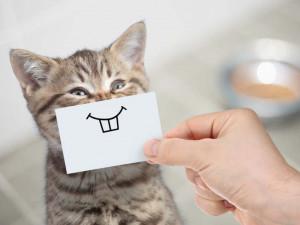 Как распознать по мимике, что вашей кошке больно