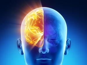 Люди с половиной мозга живут нормальной жизнью