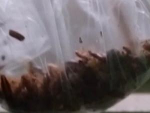 Кто подкидывает тараканов в подъезды Челябинска?