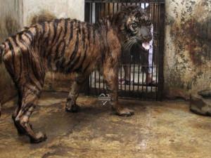 Карен Даллакян: «Преступления в отношении животных многие правоохранители считают незначительными»