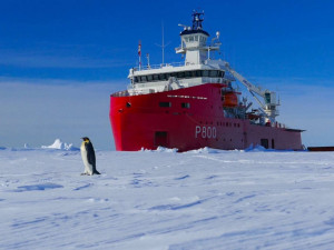 42 полярника застряли во льдах Антарктиды