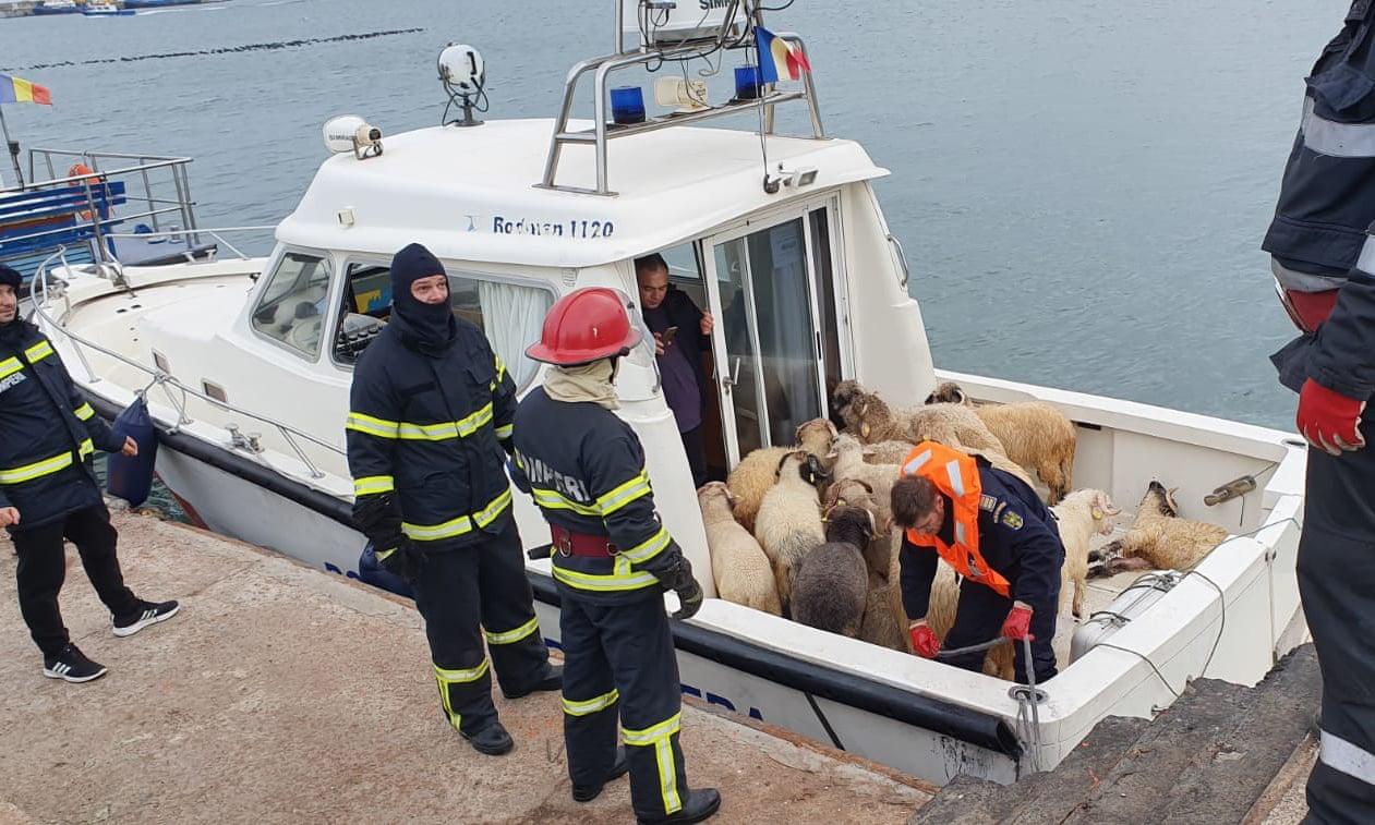 14 тысяч 600 овец потерпели крушение в Черном море