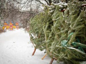 Елочные базары открылись в Челябинске