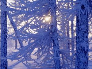 31 градус холода ожидается в Подмосковье в Новый год