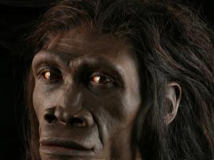 Загадка исчезновения нашего самого таинственного предка пока не раскрыта