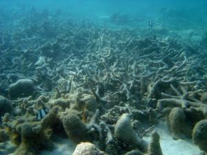 Мёртвых зон в океане гораздо больше, чем считали ученые (видео)