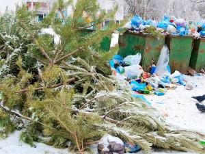 Почему елки не любят Новый год. Как на смену елочным базарам придут елочные «кладбища».