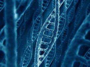 Возможность жить в пять раз дольше ученые дали сначала червям
