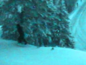 «Снежного человека» засекла веб-камера транспортного департамента