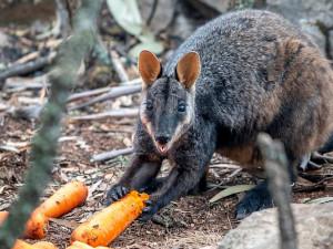 Помощь с небес: морковь и картофель разбрасывают над Австралией