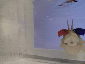 Каракатицам надели 3D-очки и узнали много нового (видео)